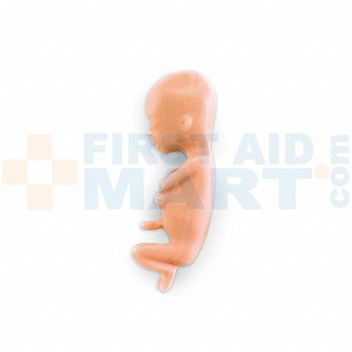 Human Fetus Replica - 13 Week - LF00828U