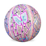 Human Anatomy Clever Catch Ball - 7001