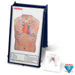 Auscultation Board with Case Only - LF01190U