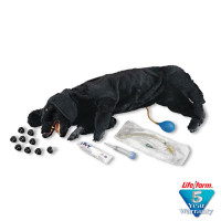 Life/form Basic Sanitary CPR Dog - LF01156U