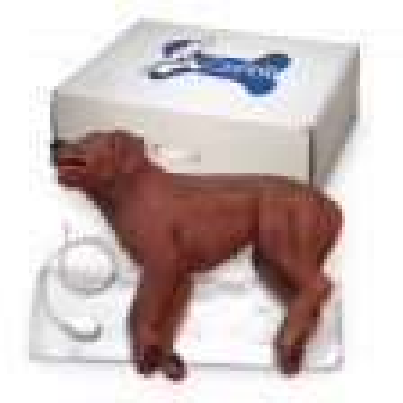 CasPeR The CPR Dog - 5000