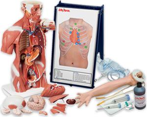 Image of Muscle Torso manikin pack